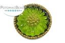 Czech Cab Green Sunburst Flower